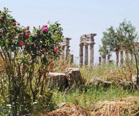 Apamea-Syria_by-flickr-usr_Alessandra-Kocman_under-cc-license
